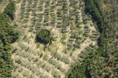 Tour of Highlands Forestry Practices