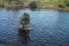 Salmon Fishing - Release on the Margaree.