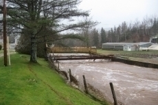 Hatchery Brook. High water mark visible on left.